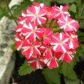 fleurs-dimanche (5)