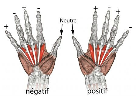 -polarite-des-mains-pt_m