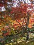 2006_11_25_Kyoto_Koyo__129__rs