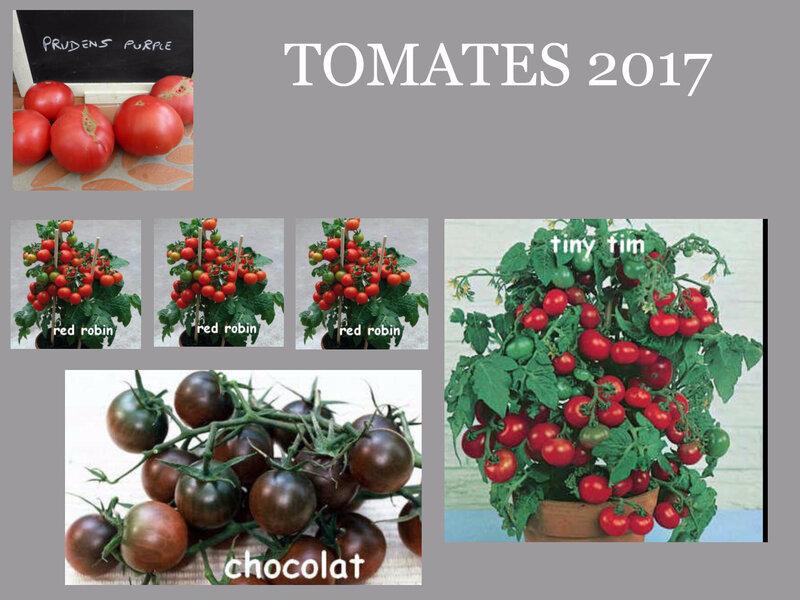 tomates 3bis
