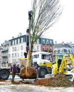Belfort Plantation arbre 21-11-2013a