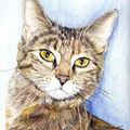 Portraits animaliers aux crayons de couleurs