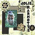Marmotte-Gaspésie-Québec