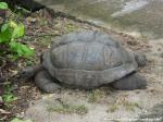 20_Tortue