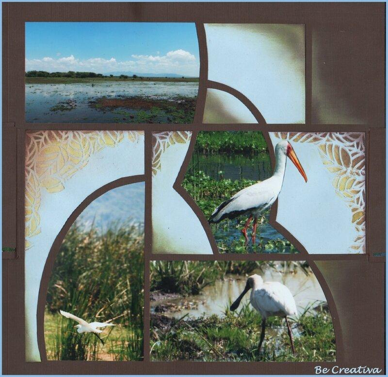 OiseauxManyaraOuverteSeule