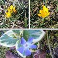 Petit clin d'oeil du printemps