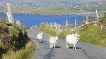 Irlande___Cork_et_Kerry___Ao_t_2007_030