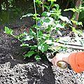 On plante un arbre