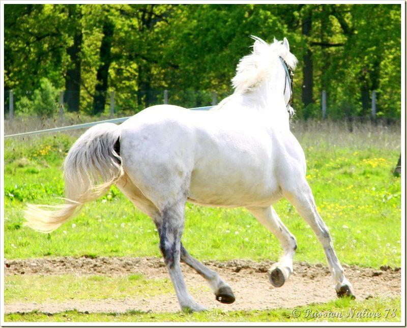 Dressage des chevaux 19