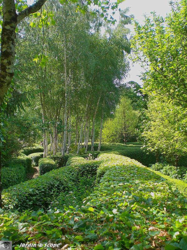 Labyrinthe de charme (carpinus betulus) et Bouleaux (Betula utilis)