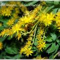 Fleurs jaunes or