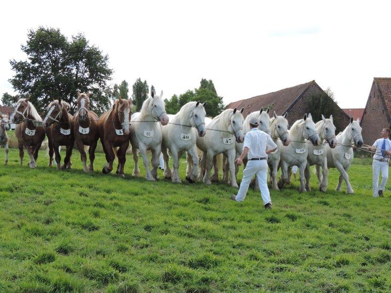 Bande de 12 poulinières suitées de l'Elevage du Boncoin (Christophe Debruyne) - 23 Juillet 2017 - National Boulonnais - 2e (Prix d'Ensemble)