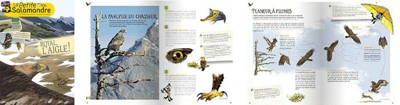 Salamandre aigle