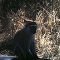samburu babouin lodge d