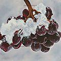 raisin-givrée-www
