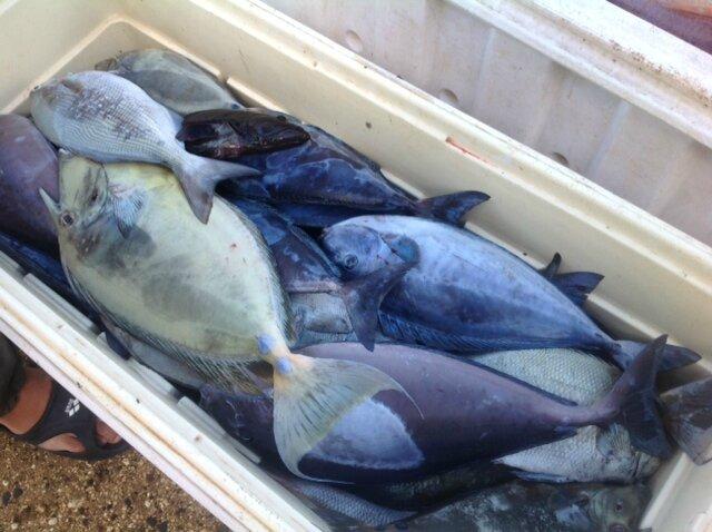 photo poisson frais