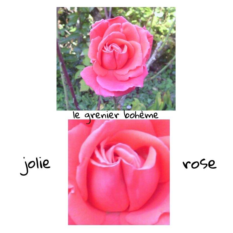 jolie rose 1