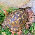 La tortue se cache pour dormir