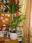 Mes_plantes__2_