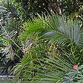 Habitation Pineau : le jardin