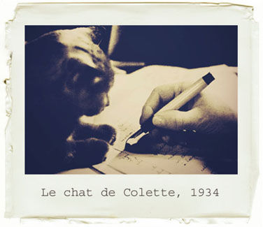 __Chat_Colette2