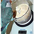 Alimentation : les aliments dangereux pour les grandes et petites perruches