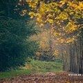 Sortie du jour à draveil, à la recherche du pic vert) (25nov2014)