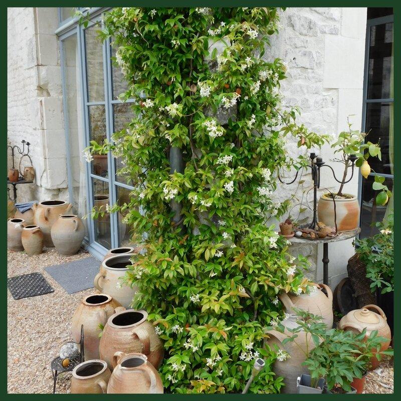 Fête des jardins Autour du cornus et héliotropes en Scévolles 03-068