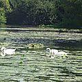 Balade au Lac 20091618