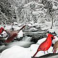 Montage photo oiseaux avec gimp