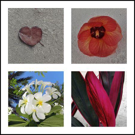 fleursgroupes
