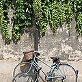 vélo, verdure_4172
