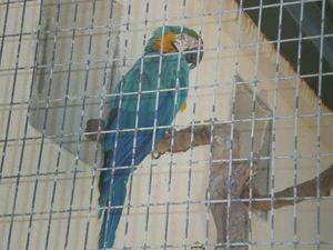 zoo 025