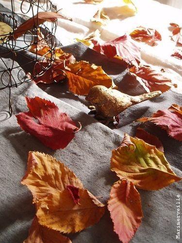 touche de poésie à l'automne