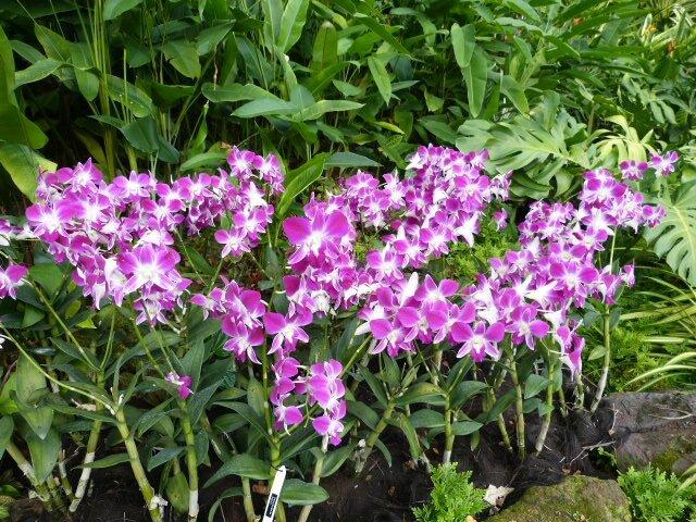 Botanic gardens 34 hectares de splendeurs v g tales for Vegetal en anglais