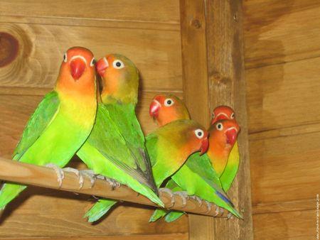 Perroquets mother nature for Oiseau vert et rouge