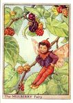 mulberry_flower_fairy