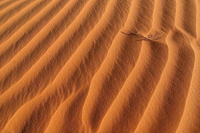 mauritanie22009-506t