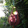 trousse aubergine 005
