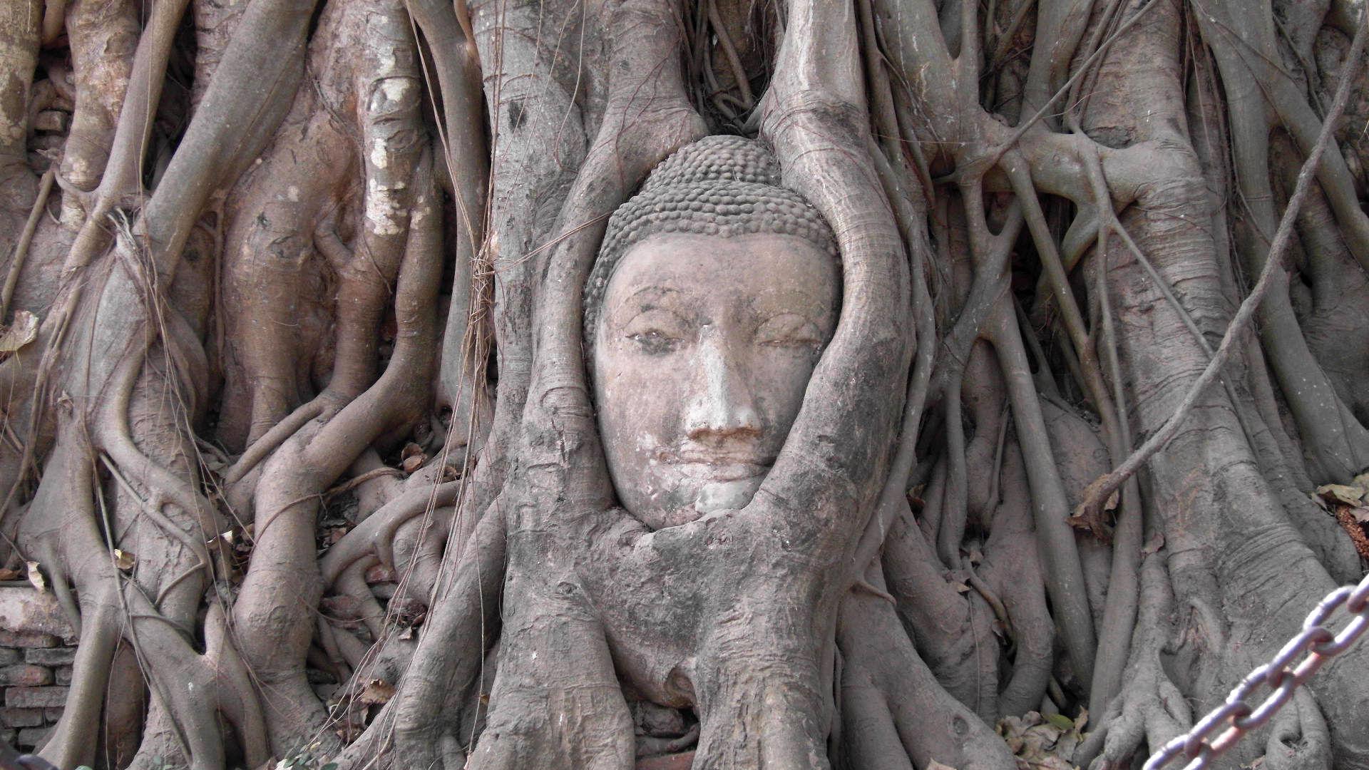 AYUTHAYA_bouddha