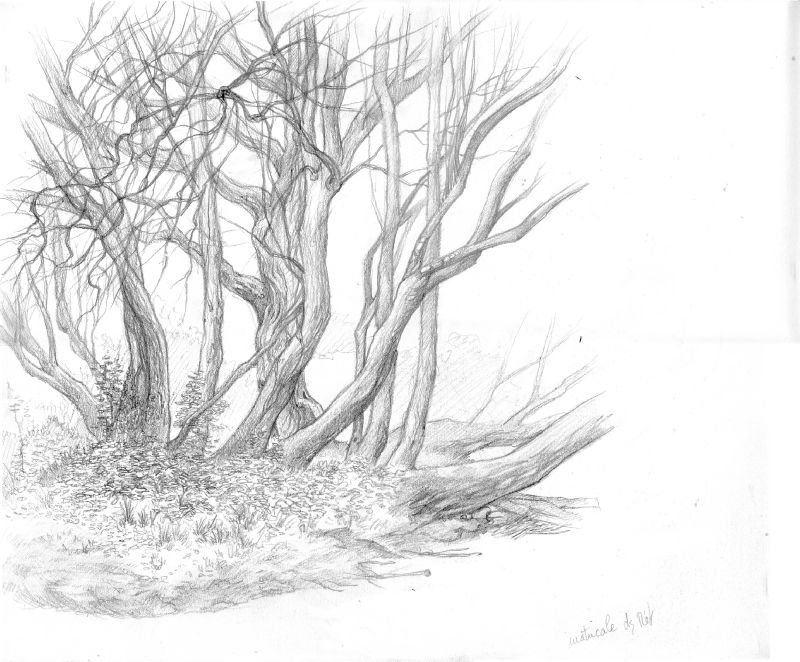 arbres obouros