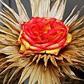 Rose bicolore en collerette