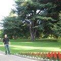 Christchurch Botanic Garden (02)
