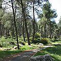 Aminadav_Forest_1