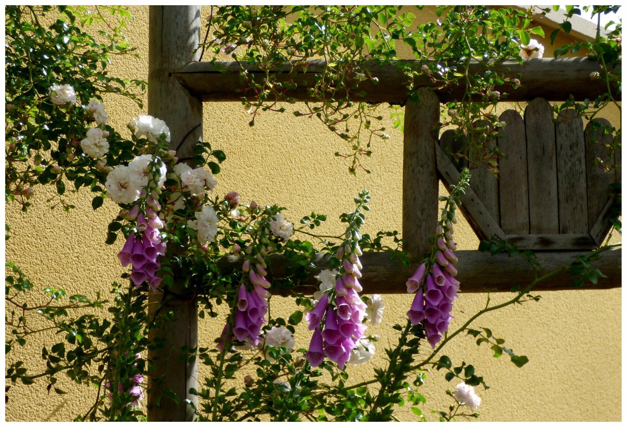 enfin un petit tour du jardin le jardin par passion