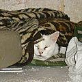 [grif' abrite] sous les couvertures! farfadet a accepté la main tendue...