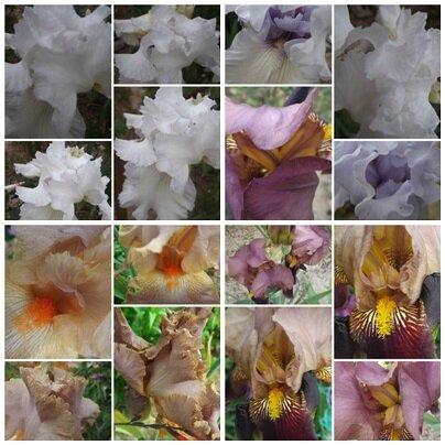 Domi & fleurs (12)