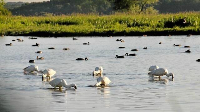 des-sorties-ornithologiques-autour-du-lac-de-grandlieu