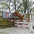 Présentation jeunes chevaux au haras
