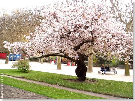 printemps_en_fleurs_7